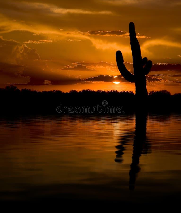 Por do sol do Saguaro & da água imagens de stock