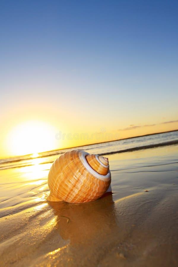 Por do sol do Seashell foto de stock