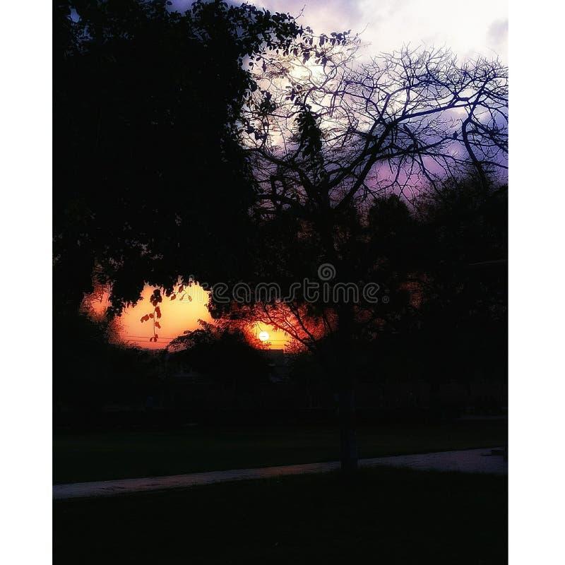 Por do sol do sol do pássaro das árvores da natureza da beleza da felicidade foto de stock royalty free