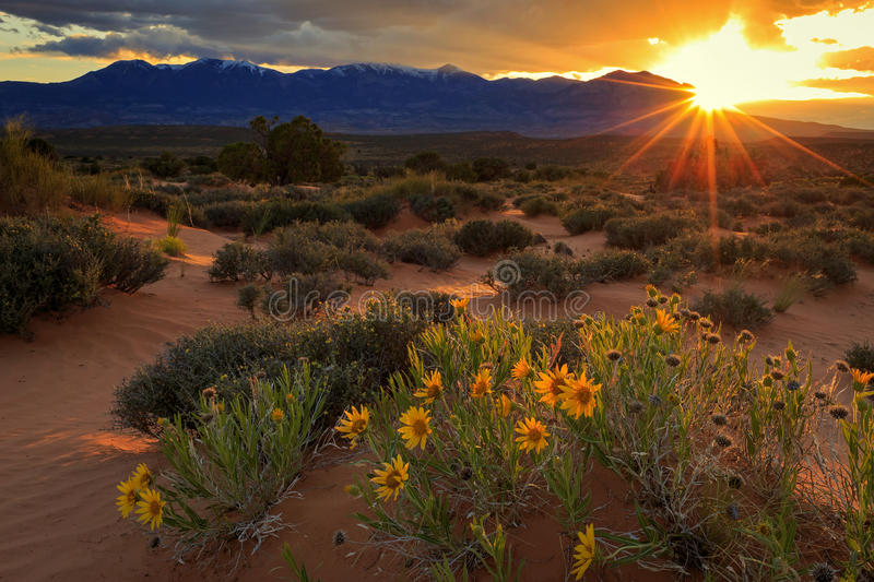 Por do sol do wildflower de Henry Mountains fotografia de stock