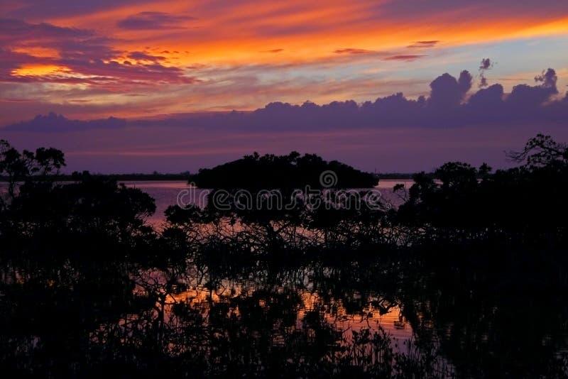 Por do sol dos manguezais imagem de stock