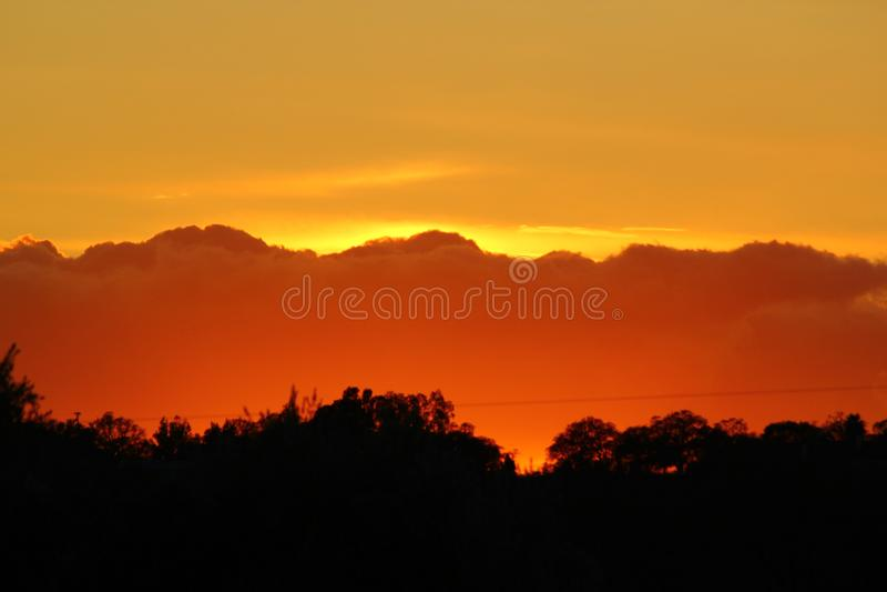 Por do sol dourado com árvores fotos de stock