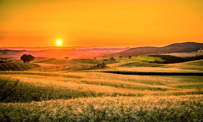Por do sol dourado de tuscan imagens de stock