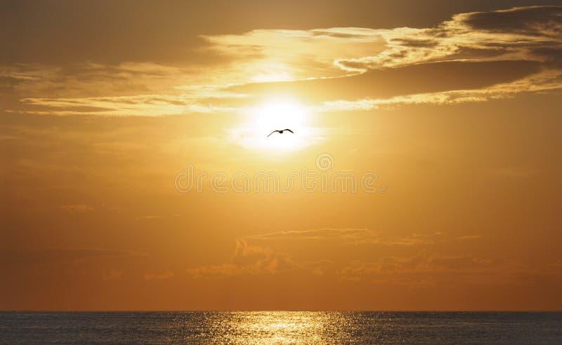 Por do sol dourado e gaivota de flutuação no mar Báltico em Klaipeda, Lituânia fotos de stock royalty free