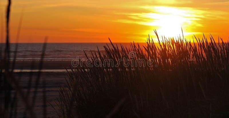 Por do sol dourado na praia imagem de stock royalty free