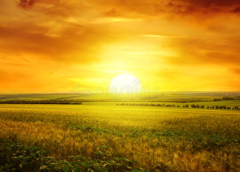 Por do sol dourado sobre o campo imagens de stock