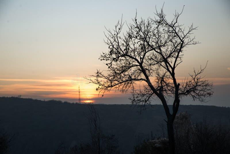 Por do sol e árvore fotografia de stock royalty free