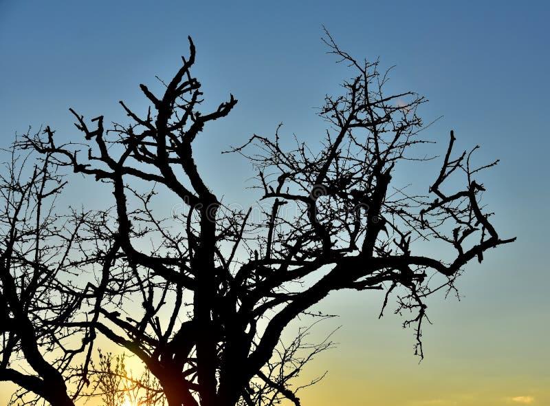 Por do sol e árvore imagem de stock