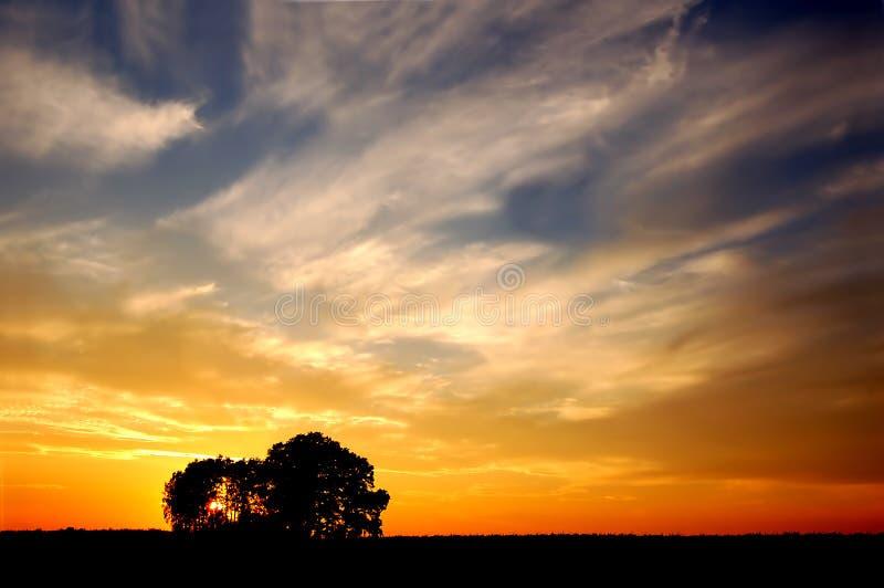 Por do sol e árvores foto de stock