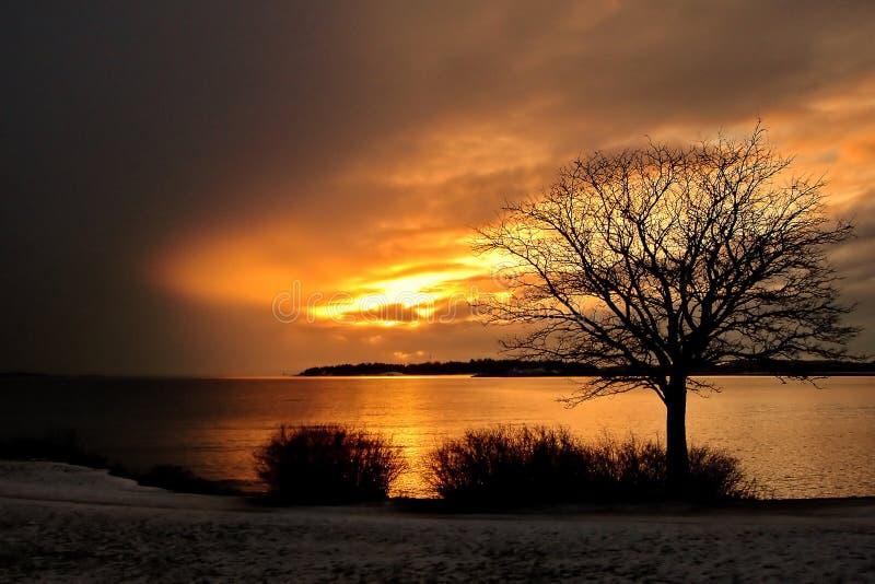 Por do sol e árvores do mar do inverno do ouro em Finlandia imagem de stock