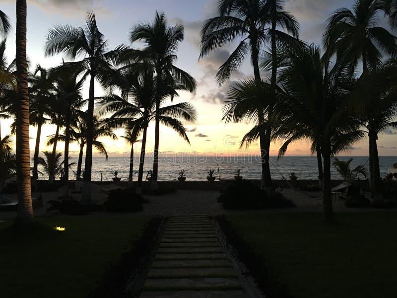 Por do sol e palmeiras fotografia de stock royalty free