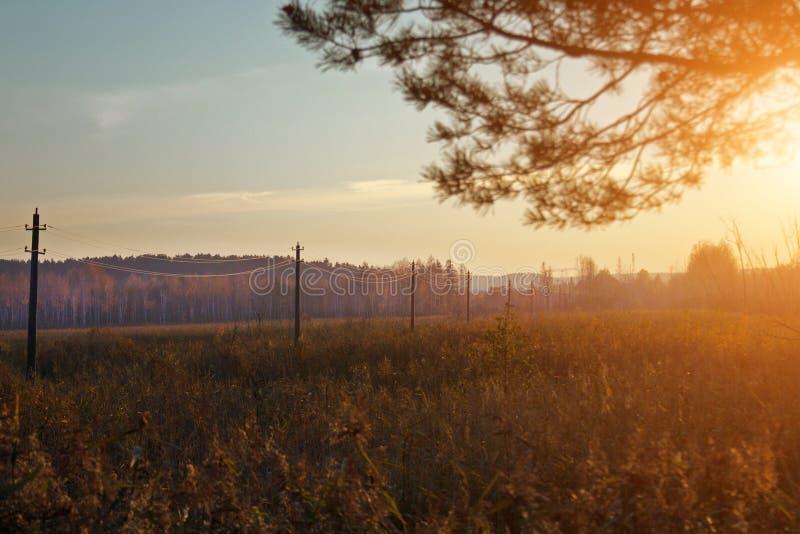 Por do sol e pinheiros Luz solar através das gramas selvagens Cores amarelas, vermelhas, verdes na luz solar fotografia de stock