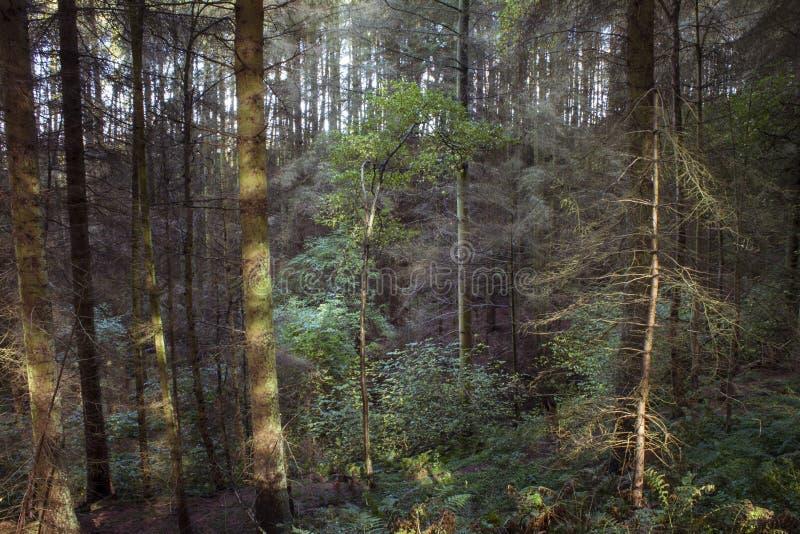 Por do sol em árvores imagem de stock royalty free