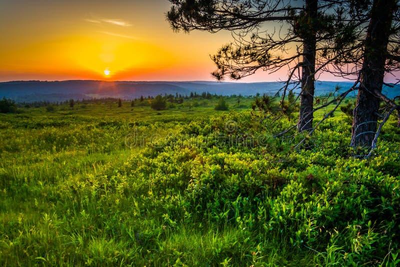 Por do sol em Dolly Sods Wilderness, floresta nacional de Monongahela, nós fotos de stock