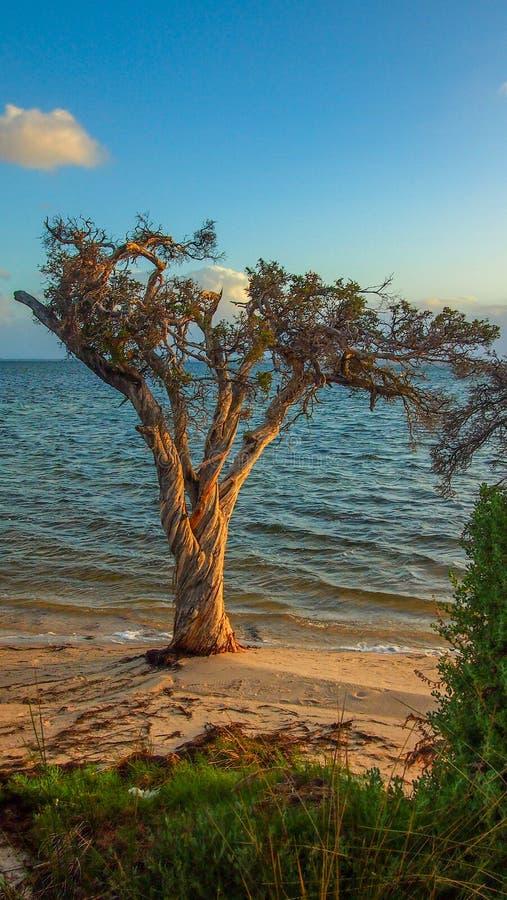 Por do sol em Len Howard Conservation Park perto de Mandurah, Austrália Ocidental foto de stock royalty free