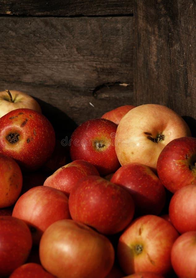 Por do sol em maçãs crated imagem de stock