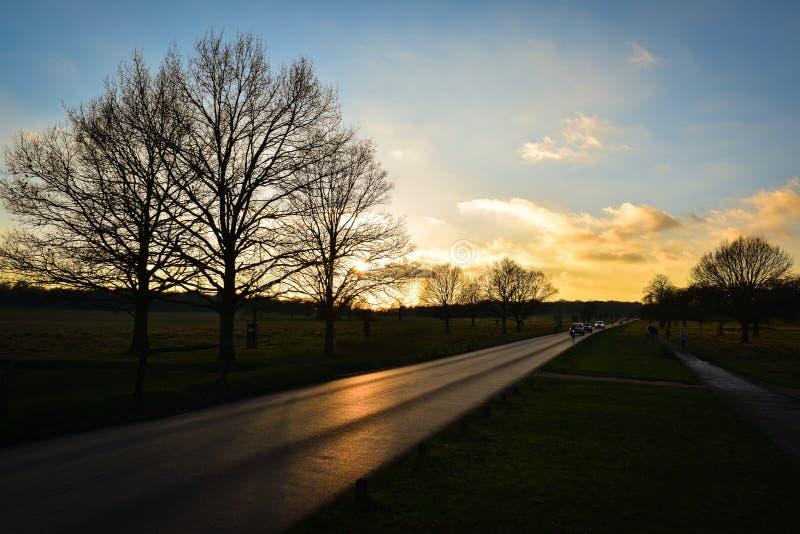 Por do sol em Richmond Park fotografia de stock royalty free