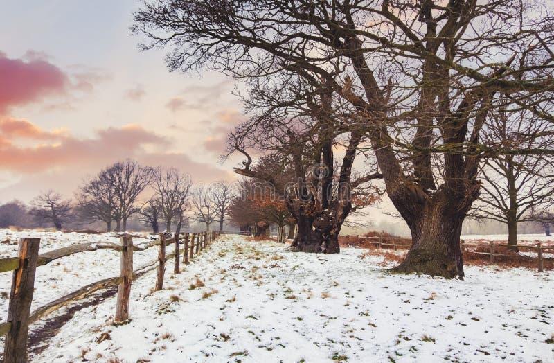 Por do sol em Richmond Park Paisagem do inverno imagem de stock