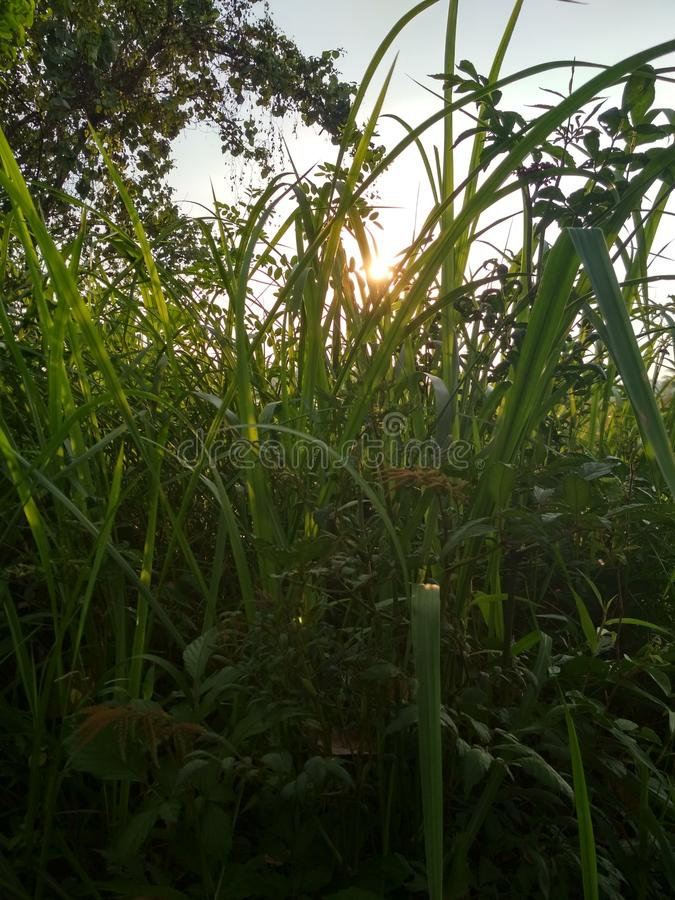 Por do sol em torno do arbusto imagens de stock royalty free