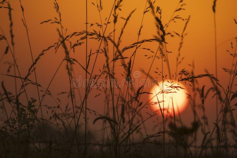 Por do sol em um campo com o sol no fundo fotos de stock royalty free