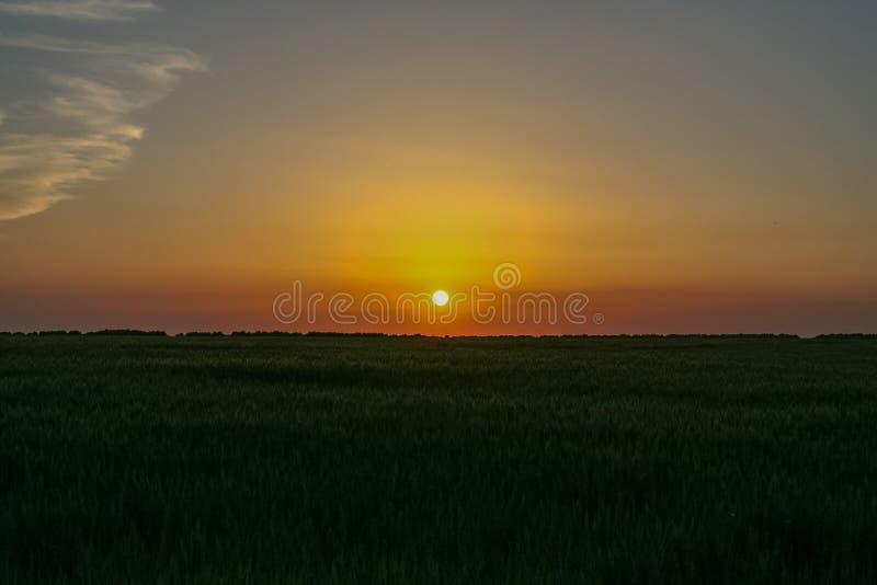 Por do sol em um campo de trigo fotografia de stock royalty free