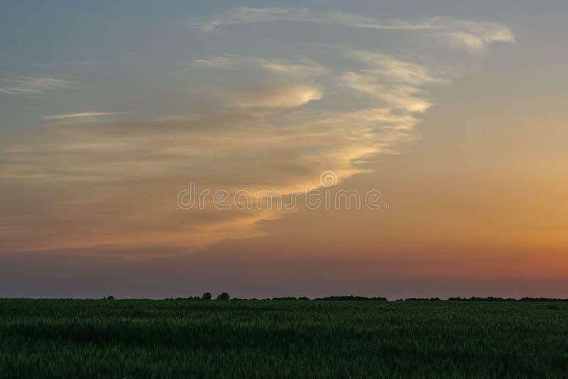 Por do sol em um campo de trigo foto de stock royalty free