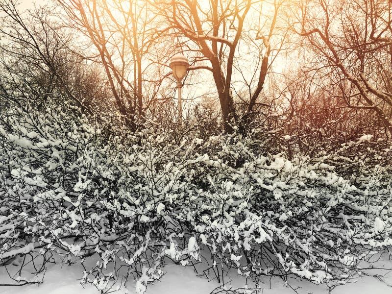 Por do sol em um parque bonito do inverno imagens de stock