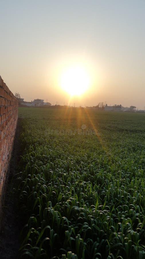 Por do sol em uma exploração agrícola fotos de stock royalty free