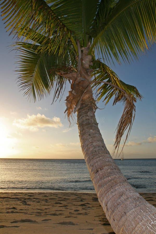 Por do sol em uma praia tropical da areia imagens de stock royalty free