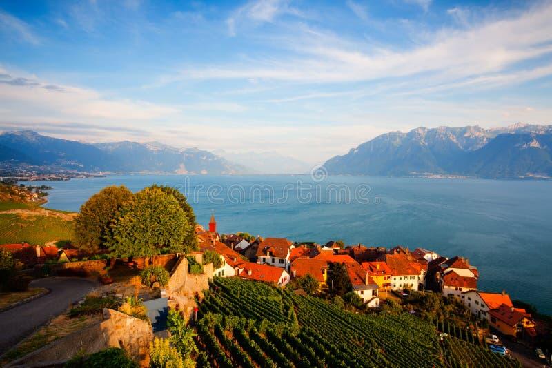 Por do sol em vinhedos sobre o lago Leman (lago de Genebra), Switzerla fotografia de stock