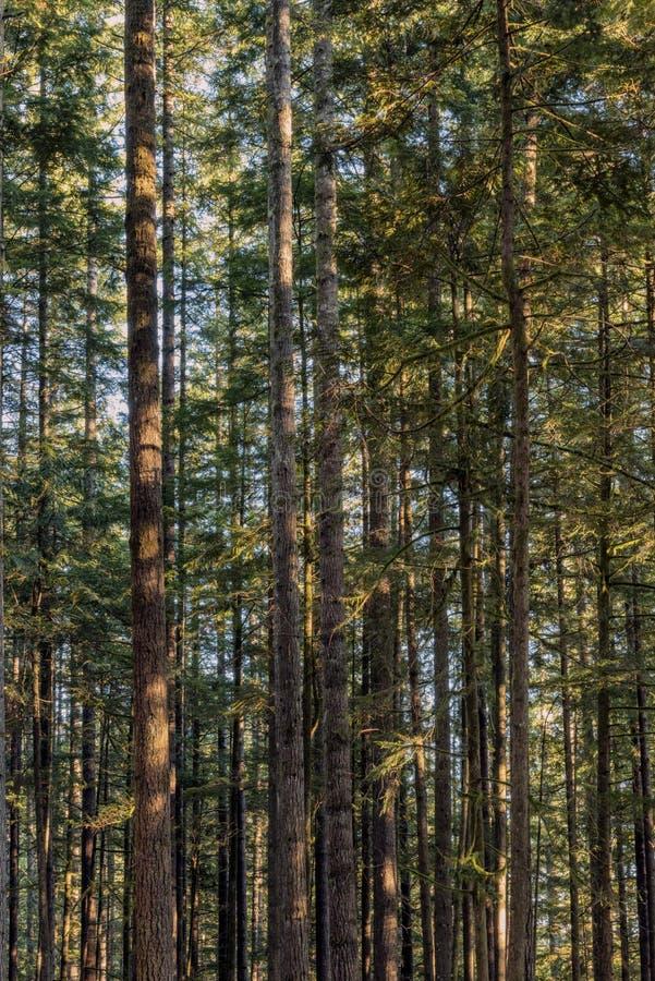 Por do sol em Wallace Falls State Park imagens de stock royalty free