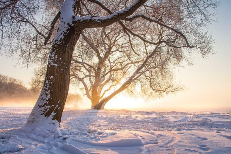 Por do sol ensolarado do inverno cena calma do inverno Fundo do Natal Árvore gelado na luz solar Paisagem nevado da natureza imagem de stock royalty free