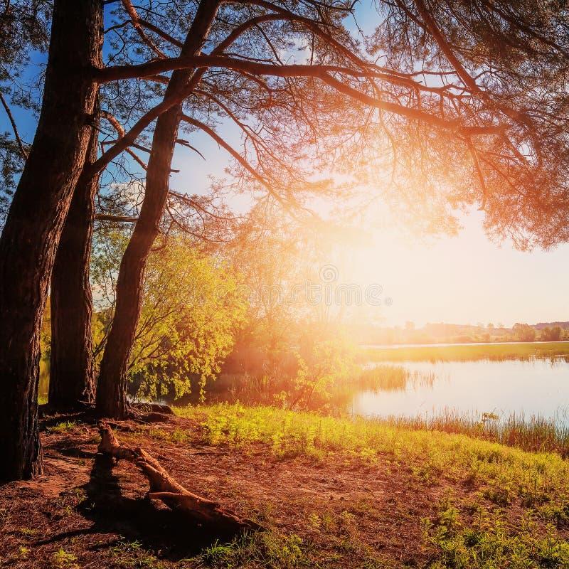 Por do sol fantástico Sol da noite sobre o rio sob a luz solar de brilho fotos de stock