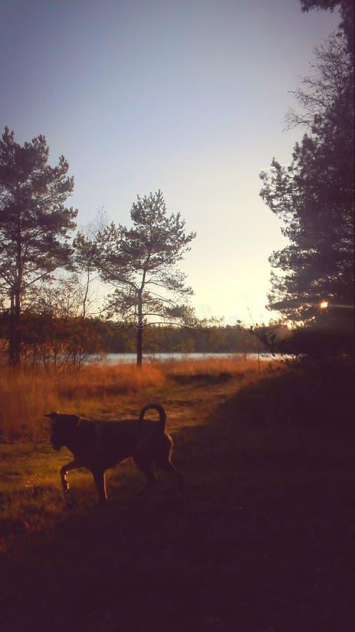 Por do sol feliz do cão foto de stock royalty free
