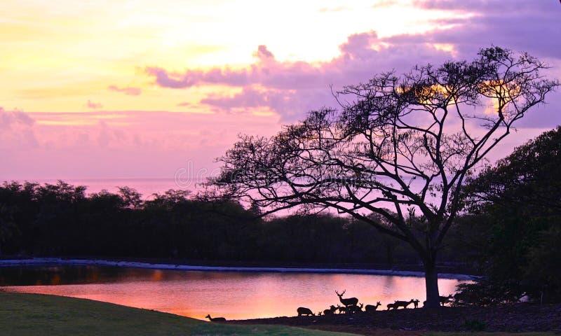Por do sol Havaí fotografia de stock