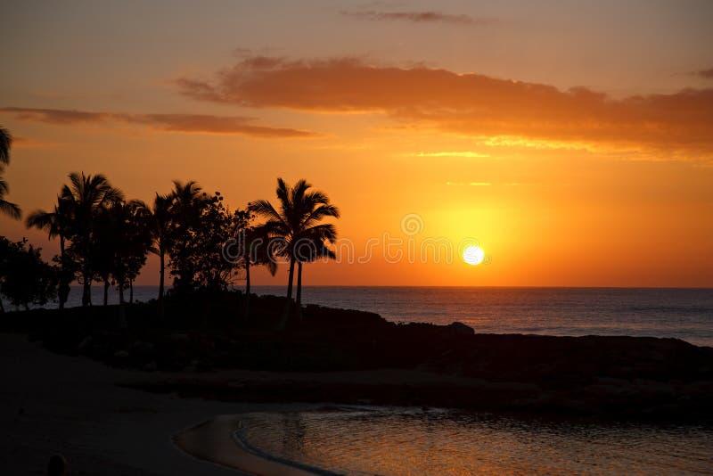 Por do sol havaiano com oceano e palmeiras imagem de stock