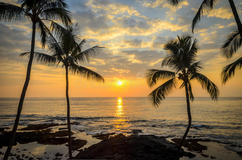 Por do sol havaiano da palma foto de stock royalty free