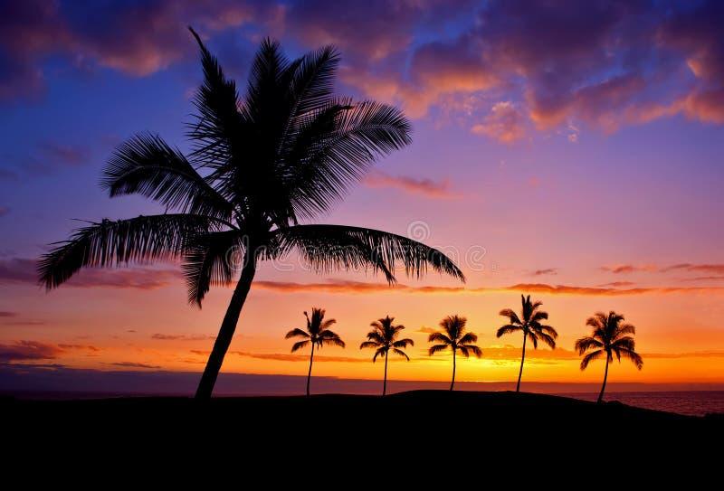 Por do sol havaiano da palmeira foto de stock royalty free