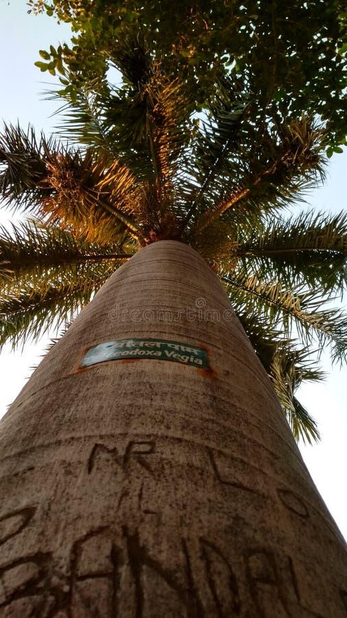 por do sol impressionante da viagem do parque verde da palmeira fotografia de stock