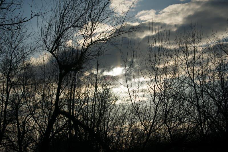 Por do sol do inverno com uma vista através das árvores imagem de stock