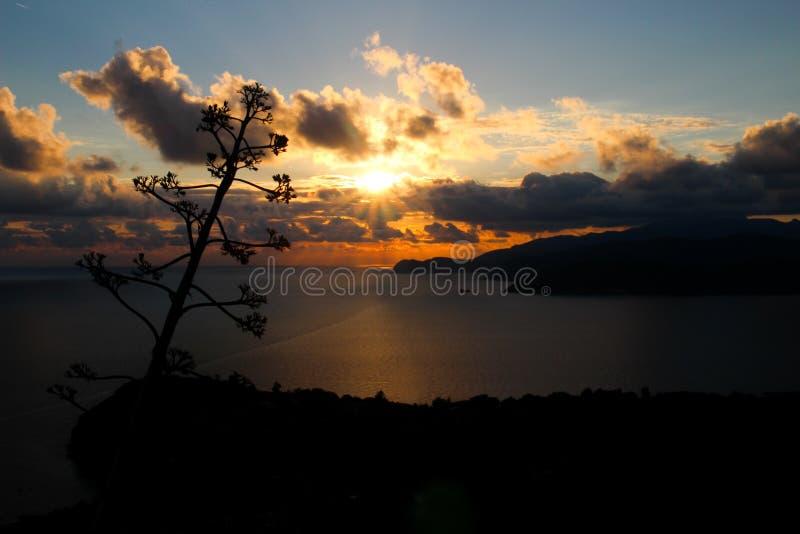 Por do sol italiano com uma árvore fotografia de stock royalty free