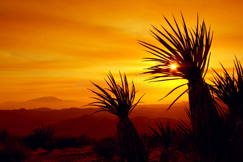 Por do sol, Joshua Tree National Park, EUA fotografia de stock