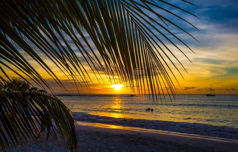 Por do sol litoral nas Caraíbas com folha de palmeira foto de stock