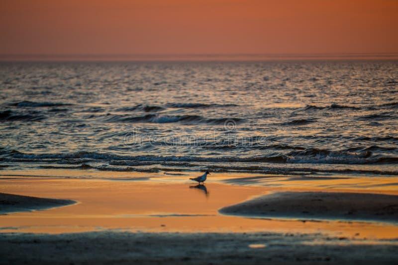 por do sol maravilhoso pelo mar imagem de stock