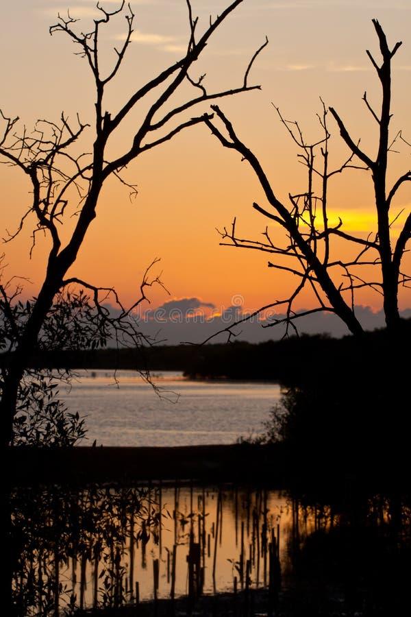Por do sol na área da preservação dos manguezais foto de stock royalty free