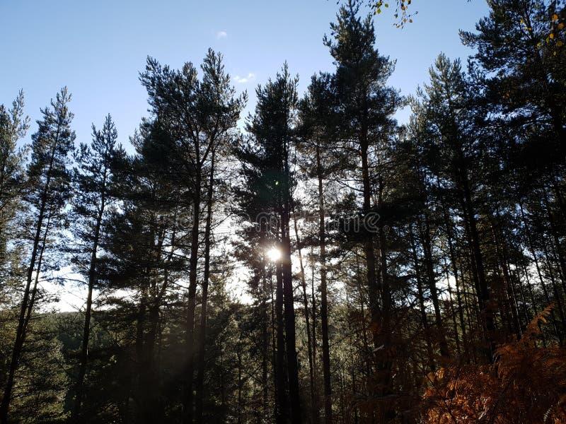 Por do sol na árvore de floresta imagem de stock royalty free