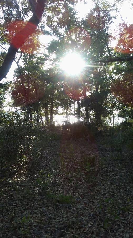 Por do sol na baía foto de stock royalty free