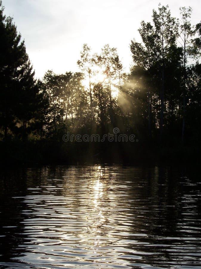 Por Do Sol Na Floresta Foto de Stock