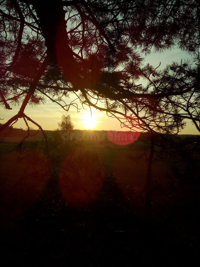 Por do sol na floresta fotos de stock royalty free