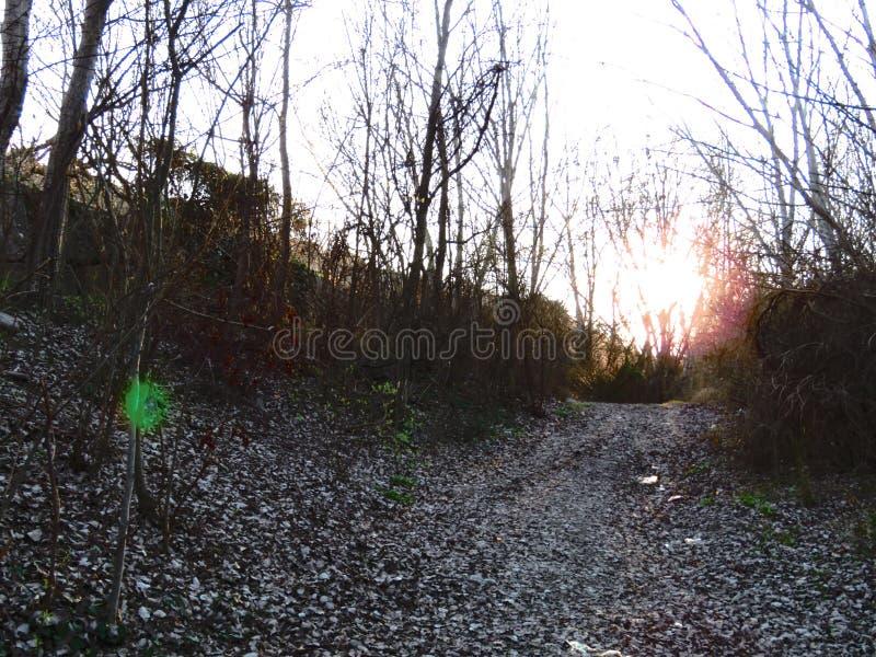 Por do sol na floresta fotos de stock